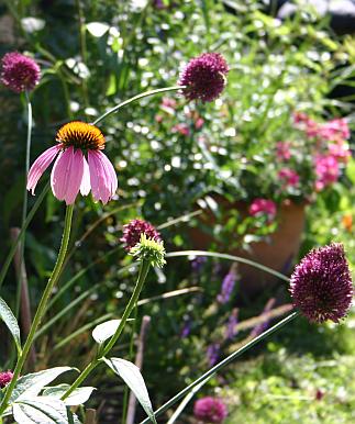 Gartenstauden-Informationen