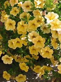 april pflanzzei für balkon